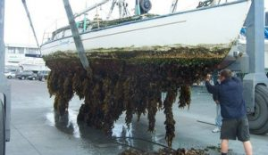 Antifouling paint protects against the growth of organisms on a hull.