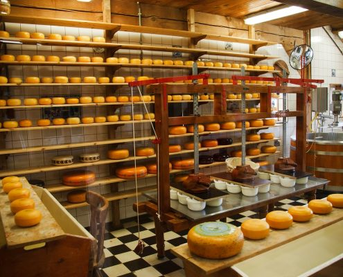 Cheese processing with Hygienic coatings NZ